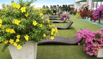 Maldives-roof garden2